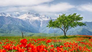 Asia Central y el Cáucaso